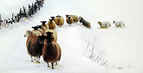 15 Sheep in Snow