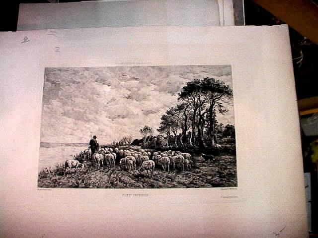 1900 Sheep on Coast Etchng