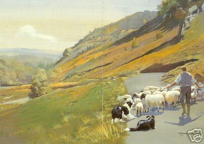 2 BC Herd Sheep