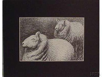 2 Cheviot Ewes