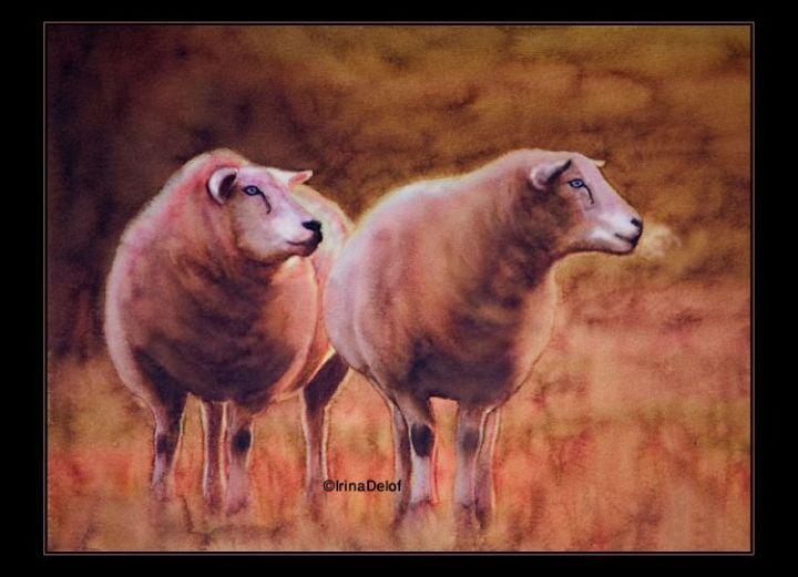 2 Cheviot X Sheep