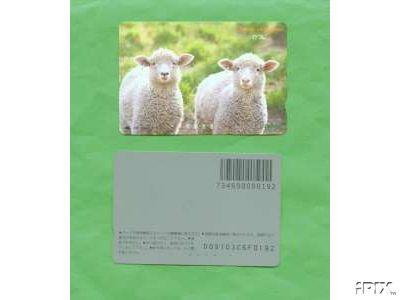 2 Ewe Lambs