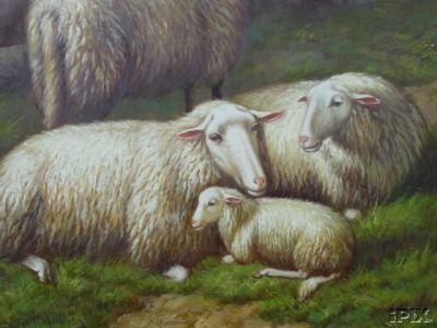 2 Ewes 1 Lamb B