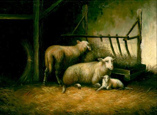 2 Ewes and 1 Lamb