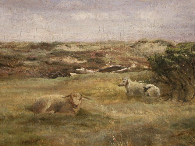 2 Resting Sheep