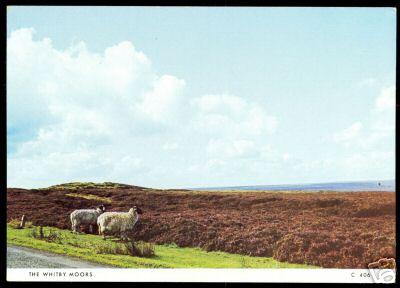 2 Sheep Whitby Moors