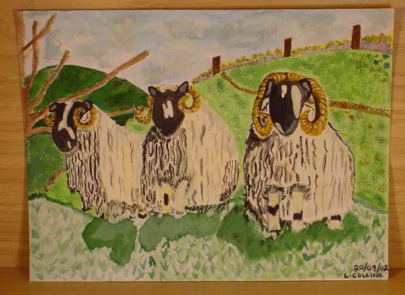 3 Black Faced Rams