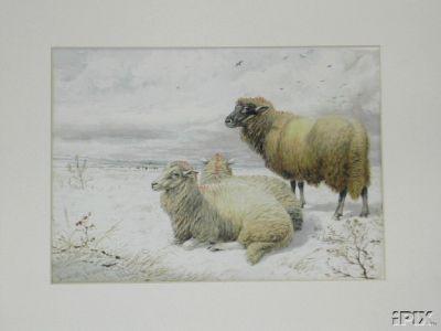 3 Sheep in Snow B