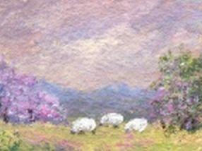 3 Tiny Sheep at Pasture