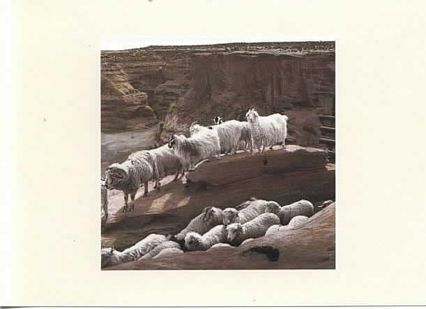 Az Sheep and Goats