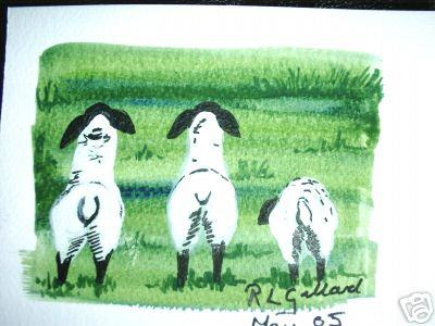 Back of 3 Grazing Sheep