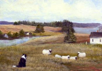 BC Watching the Sheep1