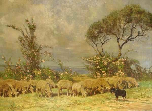 BC with Sheepflock