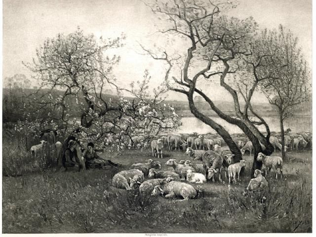 Beautiful Sheep Etching