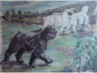 Bouvier Dog Herding Sheep