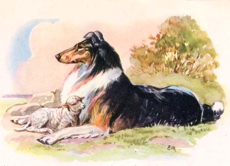 Collie with Lamb B
