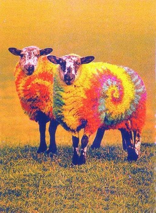 colored sheep - 28 images - gray malin frames a flock of