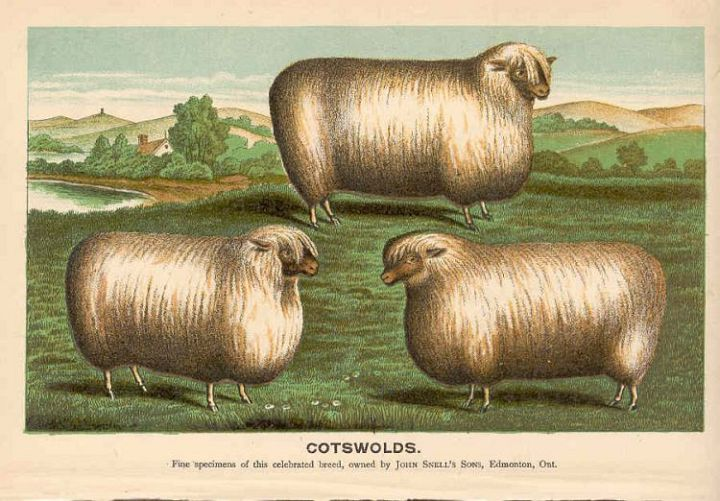 Cotswalds