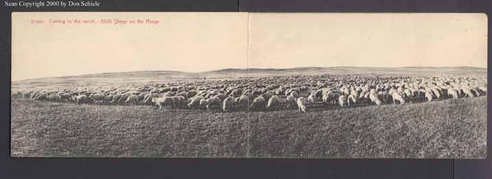 Deep Sheep 11