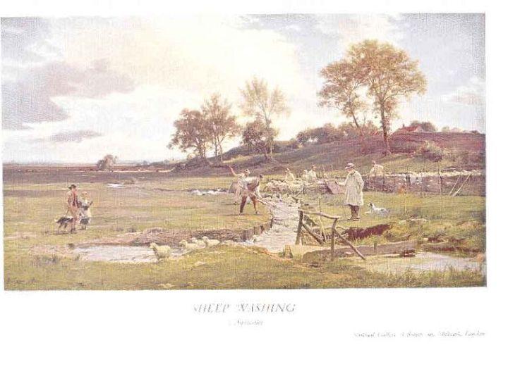 English Sheep Ashing