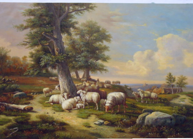 Ewes with Tunis
