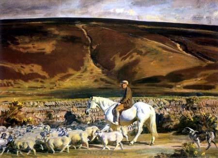 Exmoor Shepherd with Flock