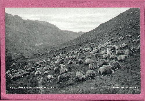 Fell Sheep
