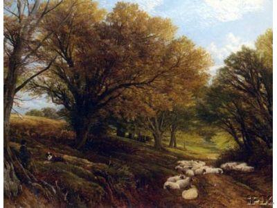 Flock Loafing Sheep