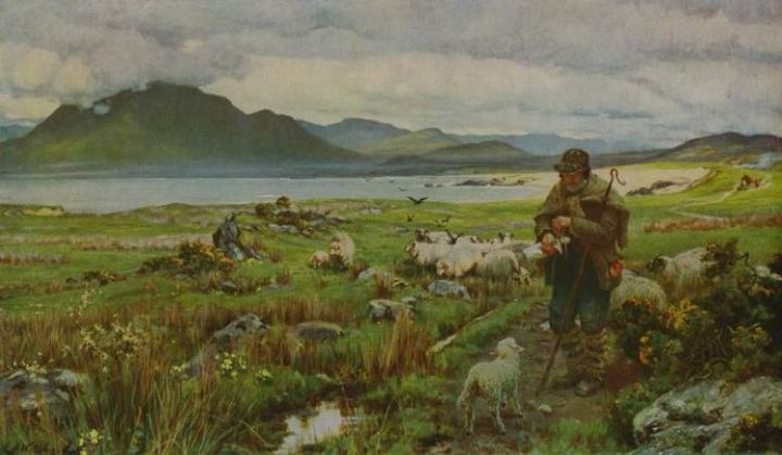 Sheep Images: Irish Shepherd with Sheep