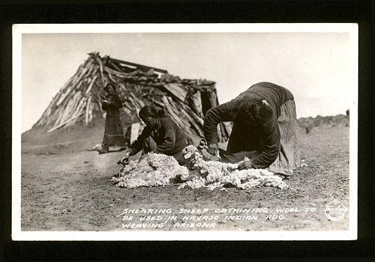Navajo Women Shearing