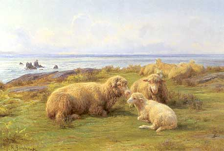 Sheep By the Sea3