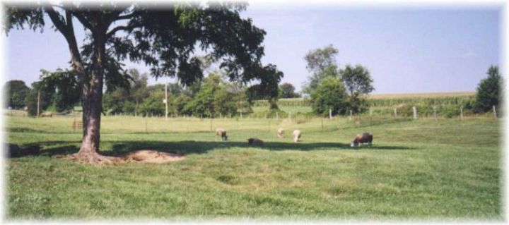 Sheep in a MD Field