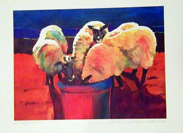 Sheep in Color