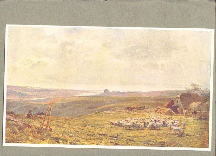 Sheep in English Landscape