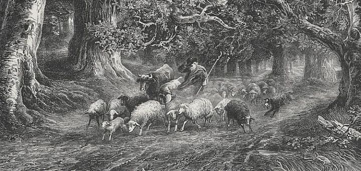 Sheep in Thunderstorm