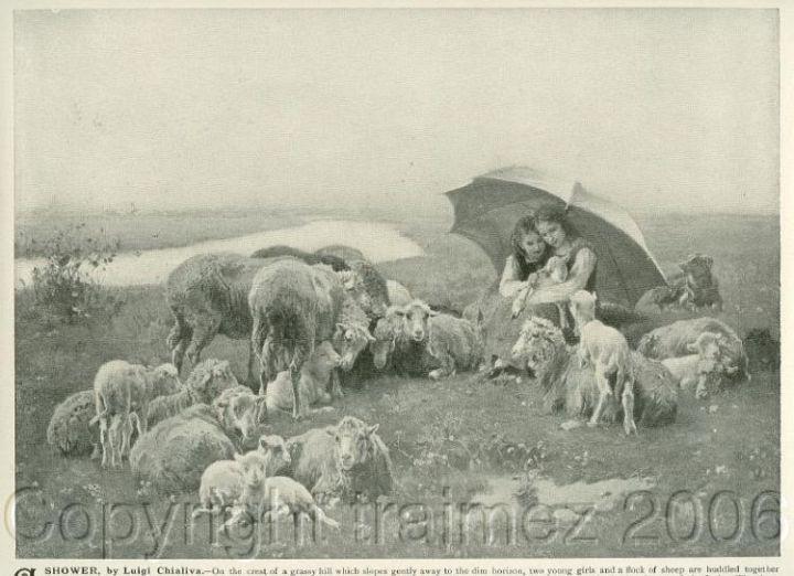 Sheep Lambing in a Shower