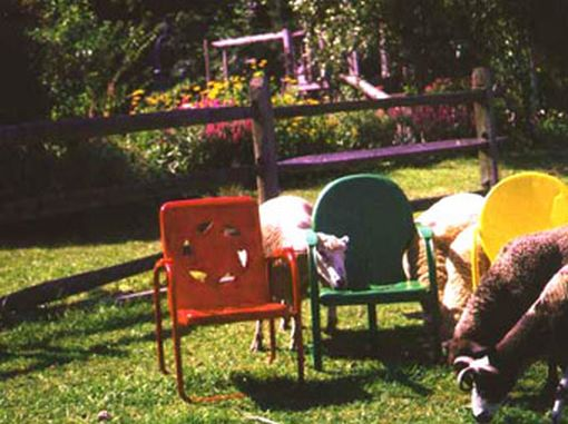 Sheep Next to Chairs
