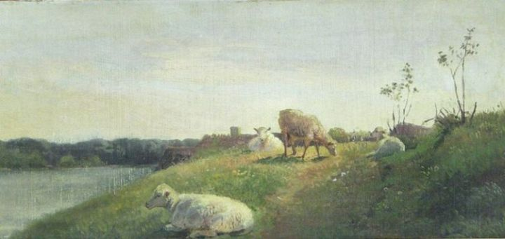 Sheep on a Sunny Evening