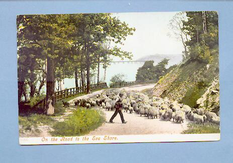 Sheep on the Road to the Seashore