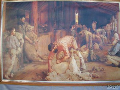 Sheep Shearers Shearing