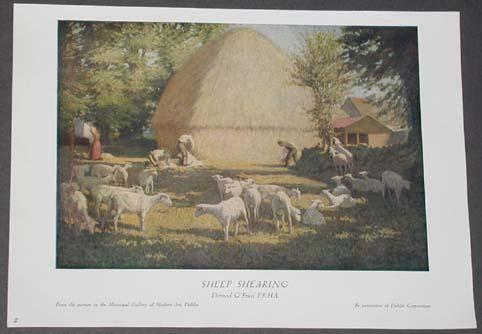 Sheep Shearing in Ireland