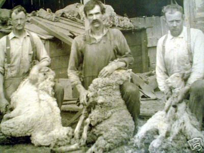 Sheep Shearing in Kansas in 1920