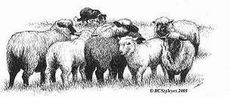 Taking Charge BC Sheep