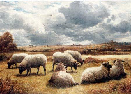 Tunis Flock
