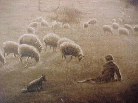 Uneeda Sheep Watching