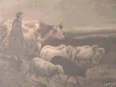 Woman Walking Cow and Sheep