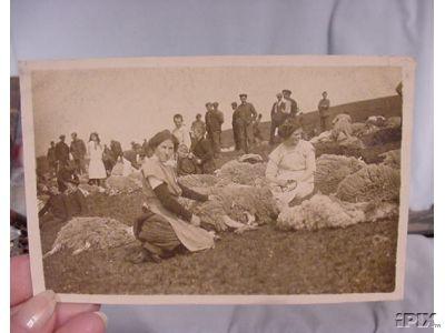 Women Shearing Sheep