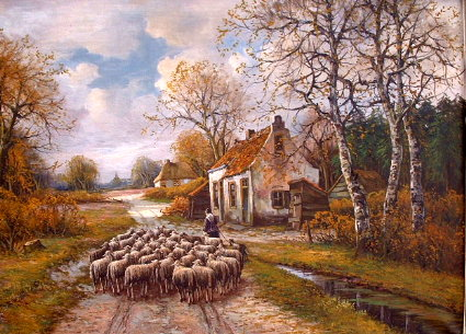Wonderful Old Sheep Picture