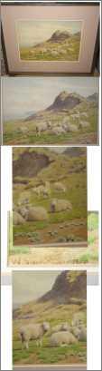 11 Ewes Resting