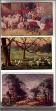 Sunset Spring Sheep